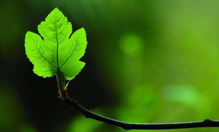 La santé au naturel
