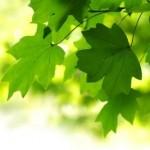 Feuilles sur fond vert